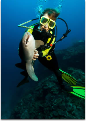 Image of a woman diver is hypnotizing a nurse shark by stroking its bell