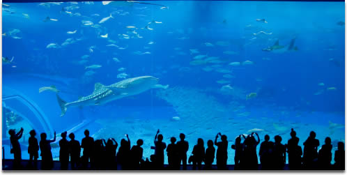 Image of an Aquarium large tank with whale shark swimming into foreground