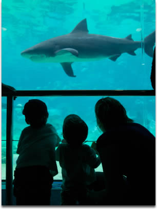 Image of Kids and Mum at the Aquarium looking at sharks and other fish